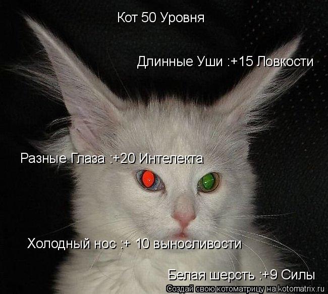 Котоматрица: Длинные Уши :+15 Ловкости Кот 50 Уровня Холодный нос :+ 10 выносливости Разные Глаза :+20 Интелекта Белая шерсть :+9 Силы
