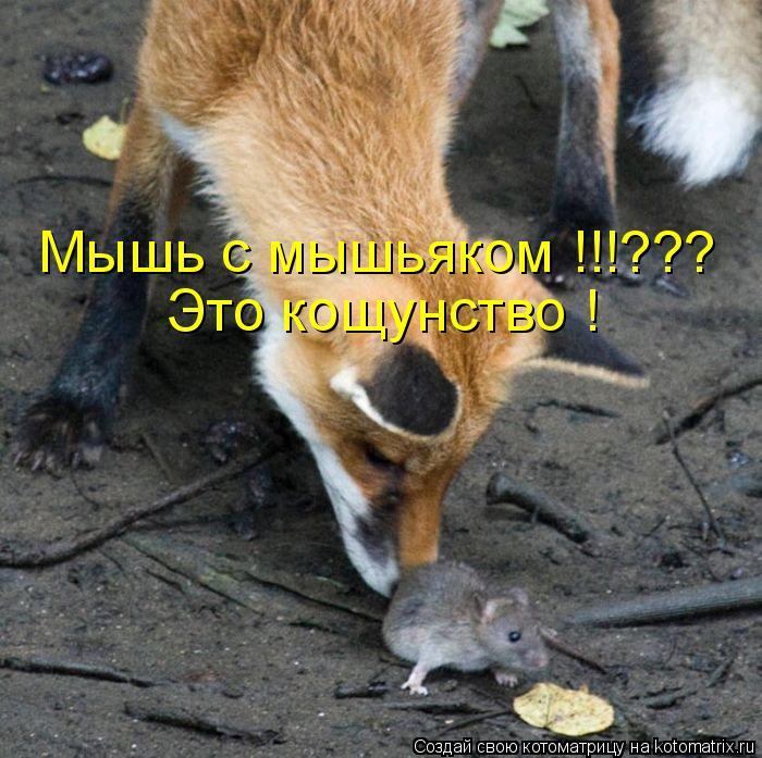 Котоматрица: Мышь с мышьяком !!!??? Это кощунство !