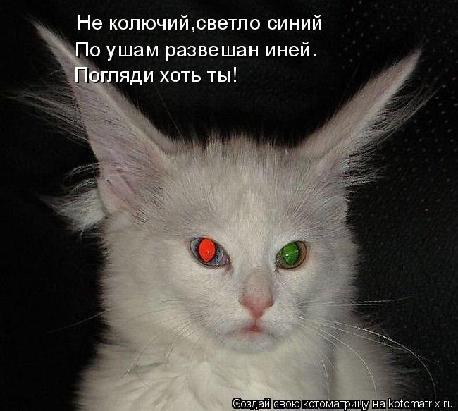 Котоматрица: Не колючий,светло синий По ушам развешан иней. Погляди хоть ты!