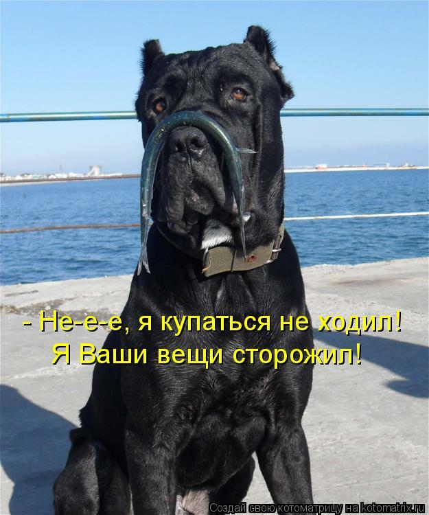 Котоматрица: - Не-е-е, я купаться не ходил! Я Ваши вещи сторожил!