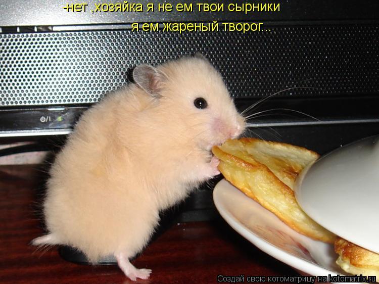 Котоматрица: -нет ,хозяйка я не ем твои сырники я ем жареный творог...
