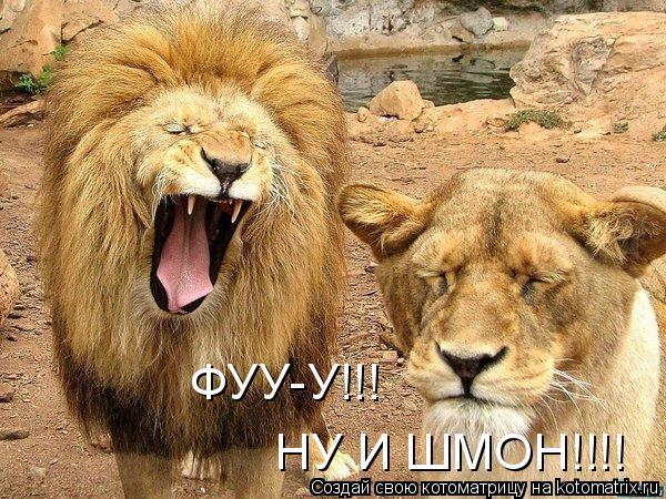 Котоматрица: ФУУ-У!!! НУ И ШМОН!!!!