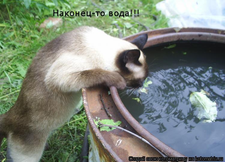 Котоматрица: Наконец-то вода!!!
