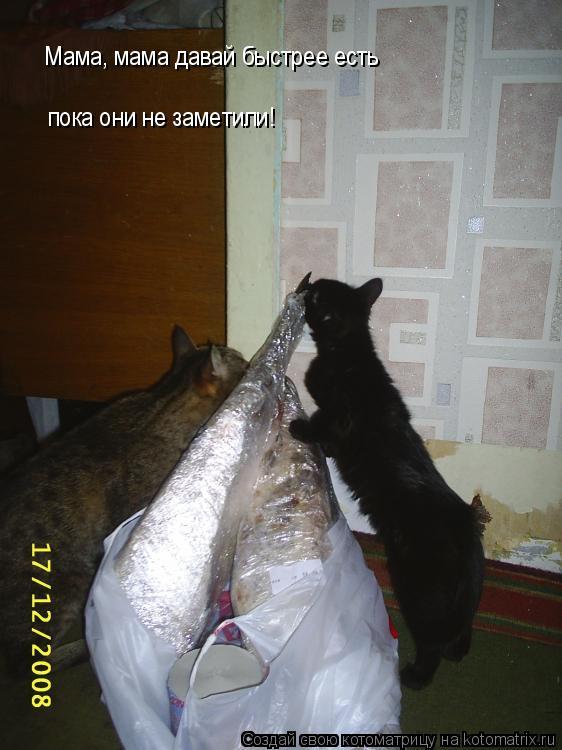 Котоматрица: Мама, мама давай быстрее есть пока они не заметили!