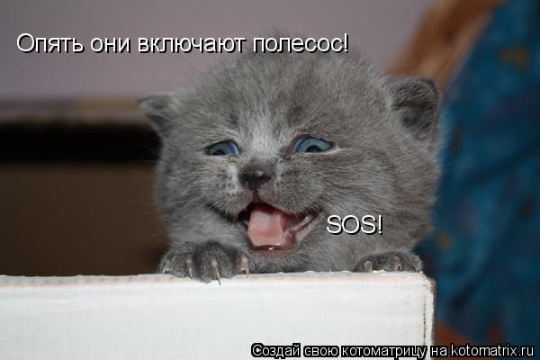Котоматрица: Опять они включают полесос! Опять они включают полесос! SOS! SOS!