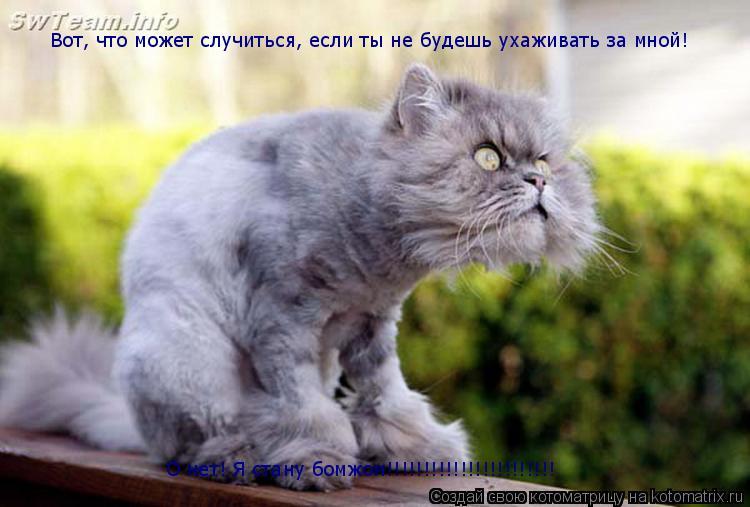 Котоматрица: Вот, что может случиться, если ты не будешь ухаживать за мной! О нет! Я стану бомжом!!!!!!!!!!!!!!!!!!!!!!!
