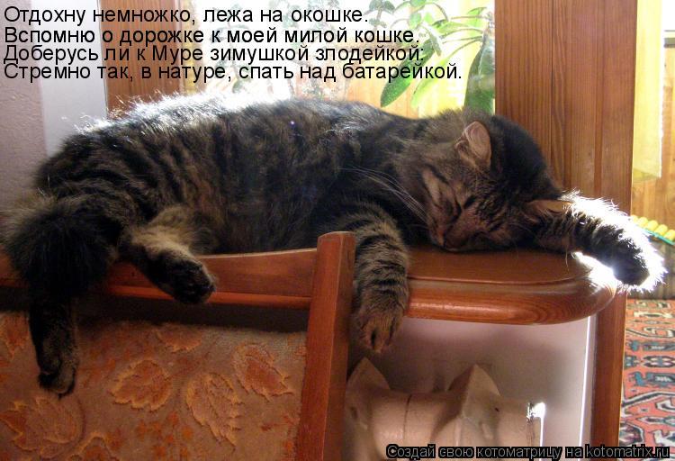 Котоматрица: Отдохну немножко, лежа на окошке. Вспомню о дорожке к моей милой кошке. Вспомню о дорожке к моей милой кошке. Доберусь ли к Муре зимушкой зло