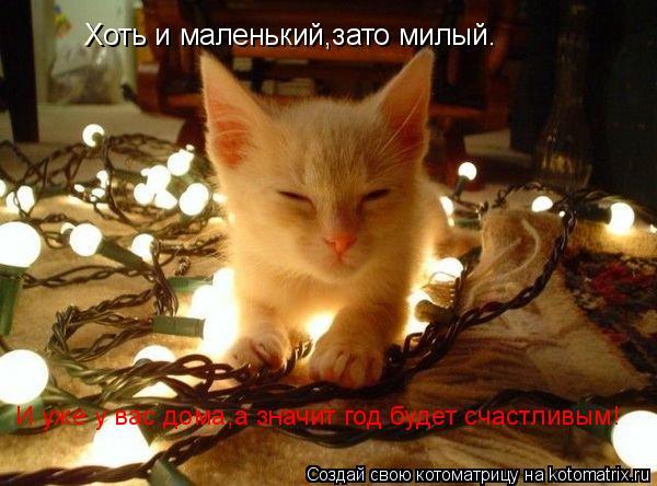 Котоматрица: Хоть и маленький,зато милый. И уже у вас дома,а значит год будет счастливым!