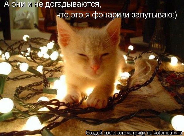 Котоматрица: А они и не догадываются, что это я фонарики запутываю:)