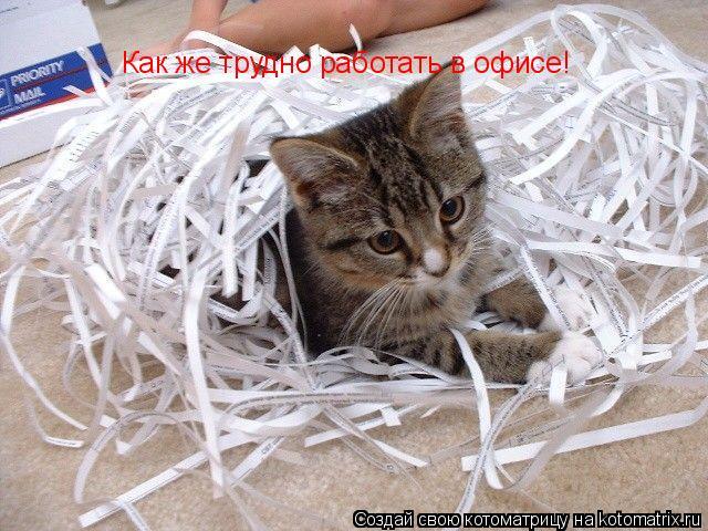 Котоматрица: Как же трудно работать в офисе!