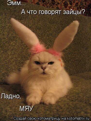 Котоматрица: Эмм... А что говорят зайцы? Ладно, МЯУ