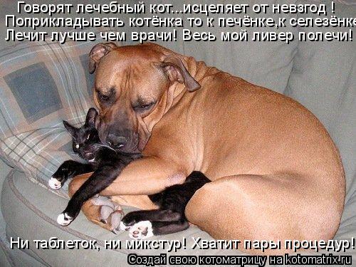 Котоматрица: Говорят лечебный кот...исцеляет от невзгод ! Поприкладывать котёнка то к печёнке,к селезёнке Лечит лучше чем врачи! Весь мой ливер полечи! Ни