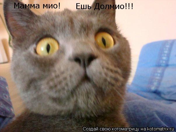 Котоматрица: Мамма мио! Ешь Долмио!!!