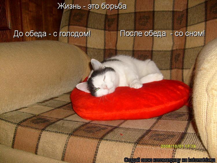 Котоматрица: Жизнь - это борьба До обеда - с голодом! После обеда  - со сном!