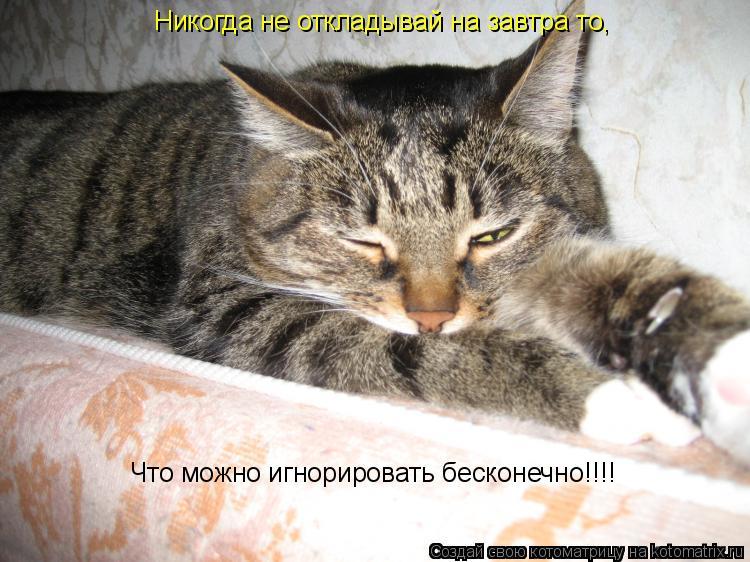 Котоматрица: Никогда не откладывай на завтра то, Что можно игнорировать бесконечно!!!!