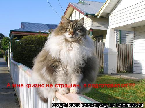 Котоматрица: А мне кризис не страшен, я подготовился!!!!