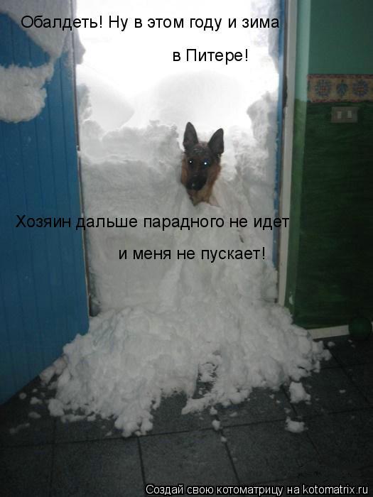 Котоматрица: Хозяин дальше парадного не идет и меня не пускает! Обалдеть! Ну в этом году и зима в Питере!
