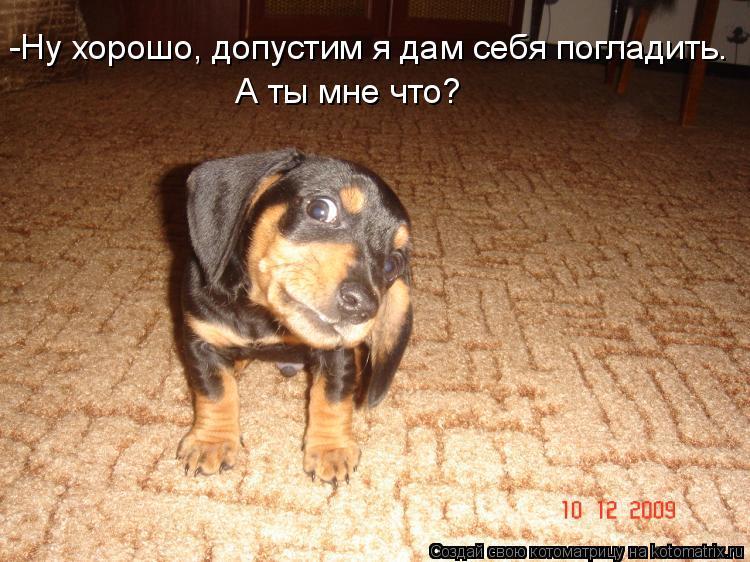Котоматриця!)))) - Страница 4 445736