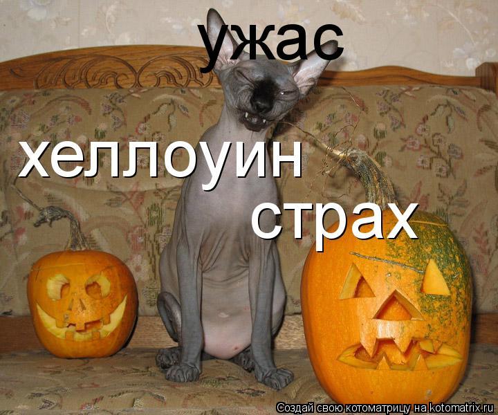 Котоматрица: хеллоуин страх ужас