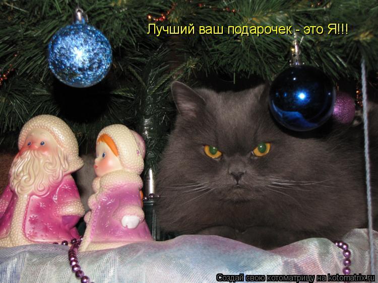 Котоматрица: Лучший ваш подарочек - это Я!!!