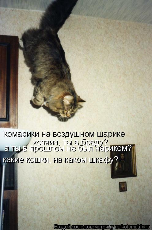 Котоматрица: комарики на воздушном шарике хозяин, ты в бреду? какие кошки, на каком шкафу? а ты в прошлом не был нариком?
