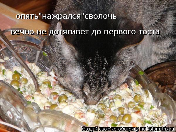"""Котоматрица: опять""""нажрался""""сволочь вечно не дотягивет до первого тоста"""