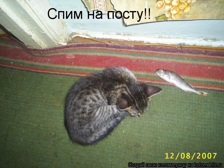 Котоматрица: Спим на посту!!