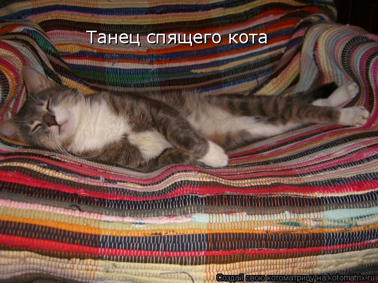 Котоматрица: Танец спящего кота