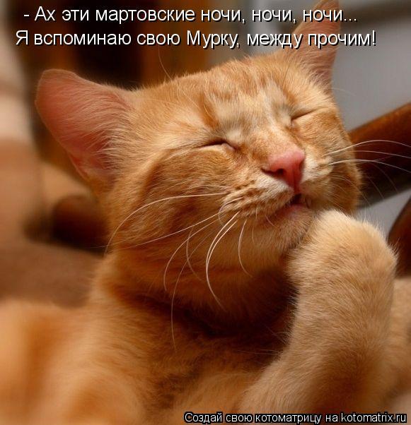Котоматрица: Я вспоминаю свою Мурку, между прочим! - Ах эти мартовские ночи, ночи, ночи...