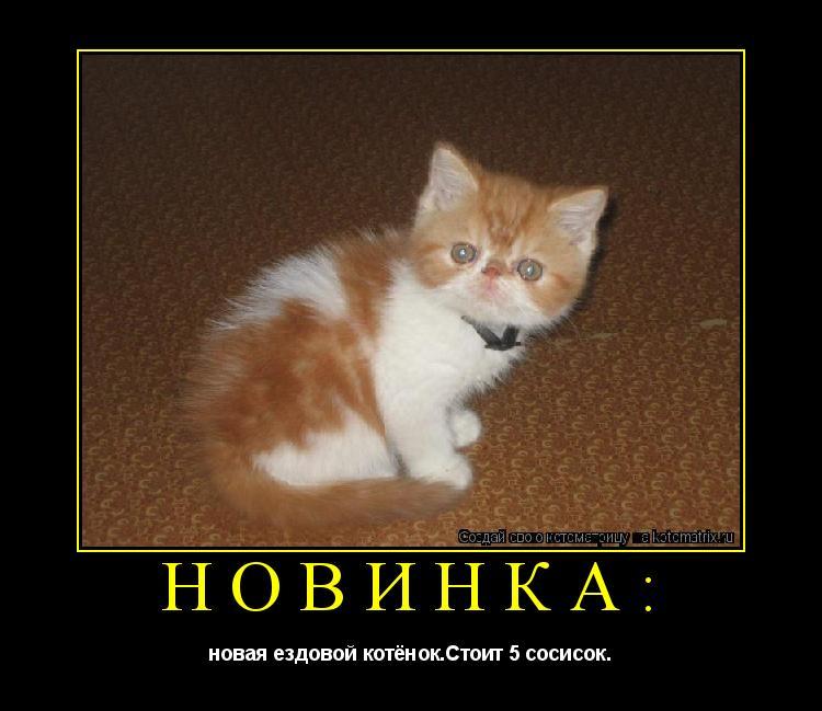 Котоматрица: Новинка: новая ездовой котёнок.Стоит 5 сосисок.