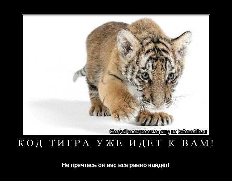 Котоматрица: Код тигра уже идёт к вам! Не прячтесь он вас всё равно найдёт!