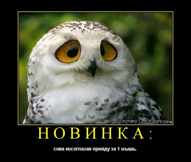 Котоматрица: Новинка: сова косоглазая прийду за 1 мышь.