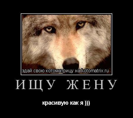 Котоматрица: Ищу жену красивую как я )))