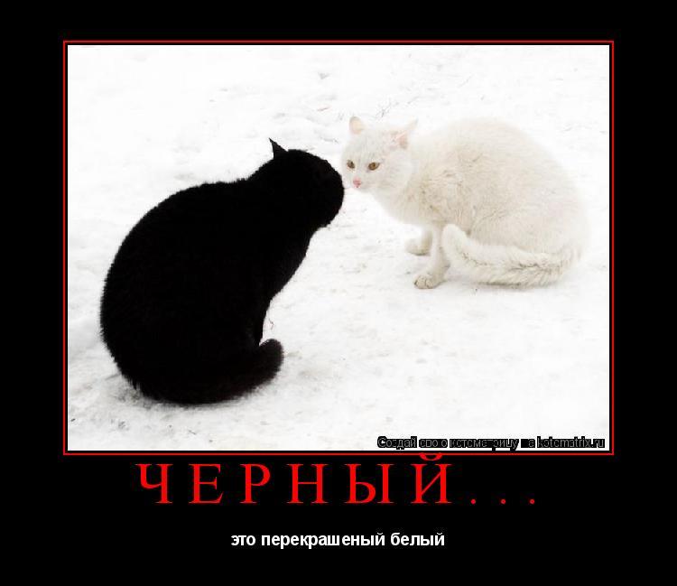 Котоматрица: Чёрный... это перекрашеный белый