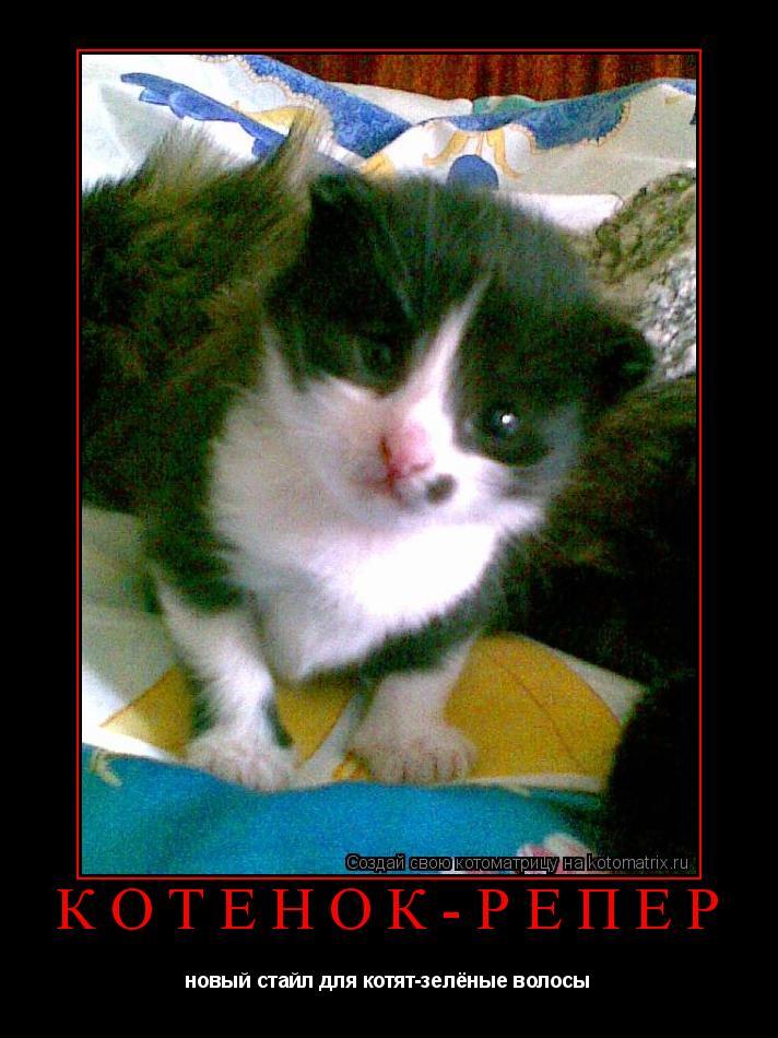 Котоматрица: Котёнок-репер новый стайл для котят-зелёные волосы
