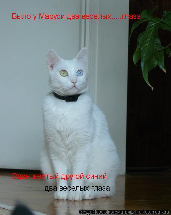 Котоматрица: Было у Маруси два весёлых.....глаза Один жёлтый,другой синий два весёлых глаза