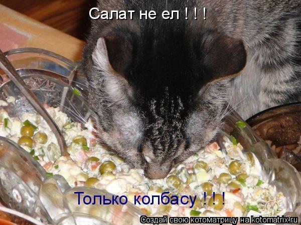 Котоматрица: Салат не ел ! ! ! Только колбасу ! ! !