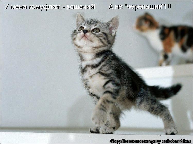 """Котоматрица: У меня комуфляж - кошачий! А не """"черепаший""""!!!"""