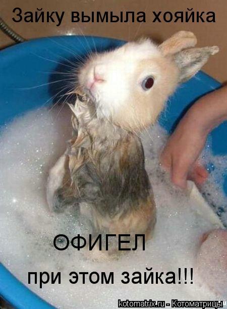 Котоматрица: Зайку вымыла хояйка ОФИГЕЛ при этом зайка!!!