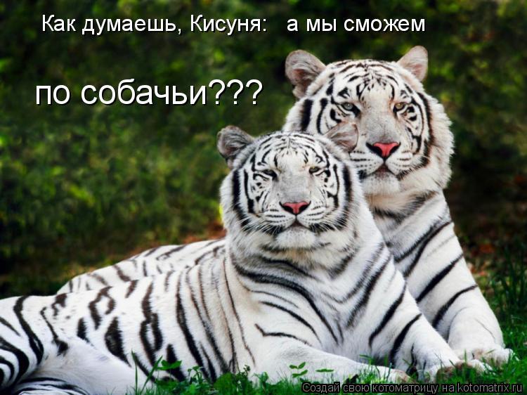 Котоматрица: Как думаешь, Кисуня:   а мы сможем по собачьи???