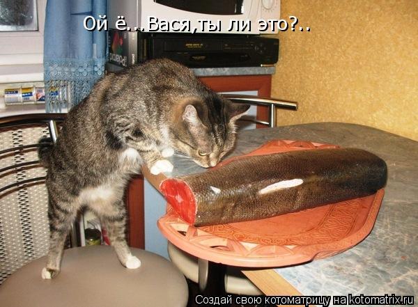 Котоматрица: Ой ё...Вася,ты ли это?..