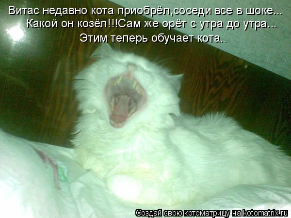 Котоматрица: Витас недавно кота приобрёл,соседи все в шоке... Какой он козёл!!!Сам же орёт с утра до утра... Этим теперь обучает кота..