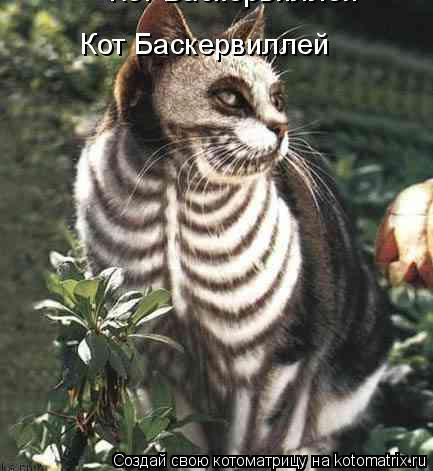 Котоматрица: Кот Баскервиллей Кот Баскервиллей