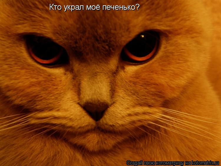 Котоматрица: Кто украл моё печенько?