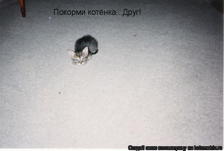 Котоматрица: Покорми котёнка...Друг!