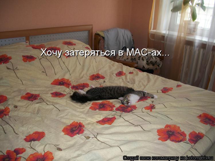 Котоматрица: Хочу затеряться в MAC-ах...