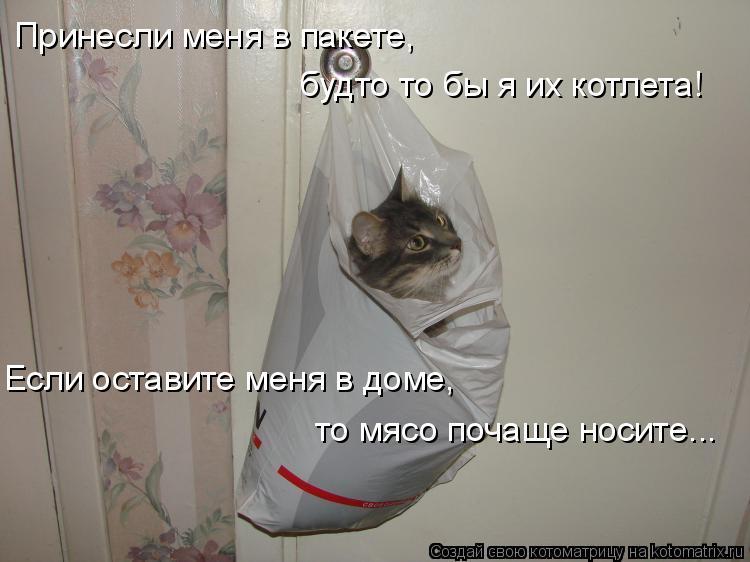 Котоматрица: Принесли меня в пакете,  будто то бы я их котлета! Если оставите меня в доме, то мясо почаще носите...