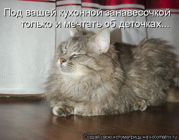 Котоматрица: Под вашей кухонной занавесочкой только и мечтать об деточках...