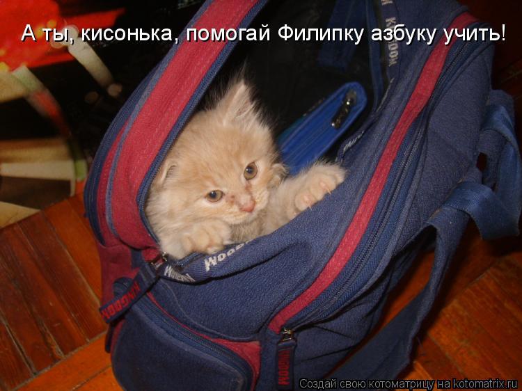 Котоматрица: А ты, кисонька, помогай Филипку азбуку учить!