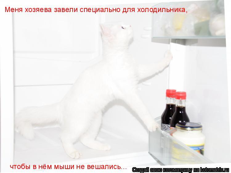 Котоматрица: Меня хозяева завели специально для холодильника, чтобы в нём мыши не вешались...
